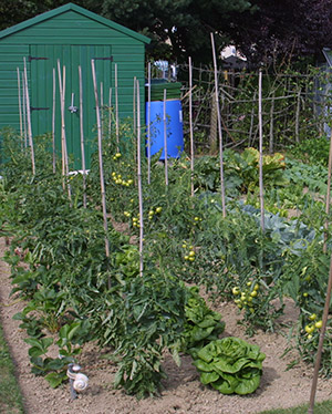 allotment photo