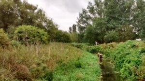 River Stour weed cutting